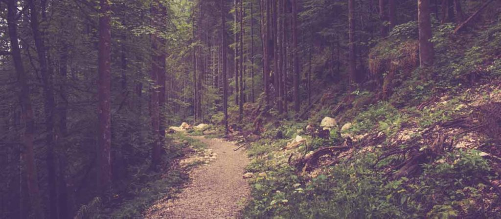 Best Instagram filters for Forests: Lark and Juno