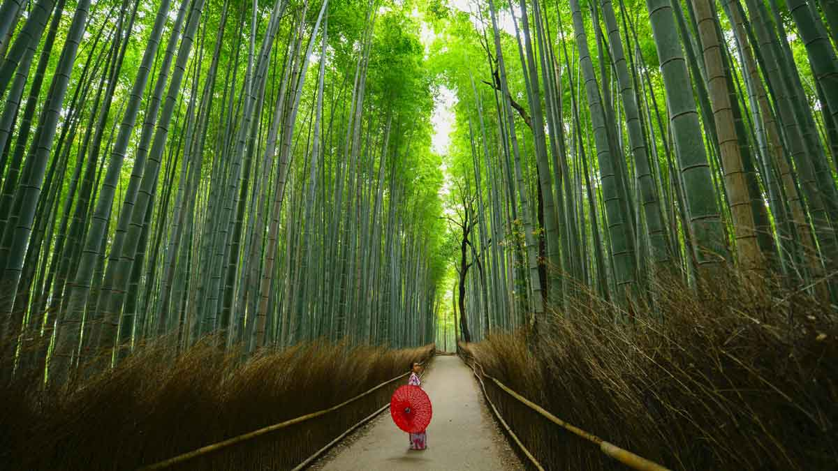Coolest places on Earth - Arashiyama, Japan