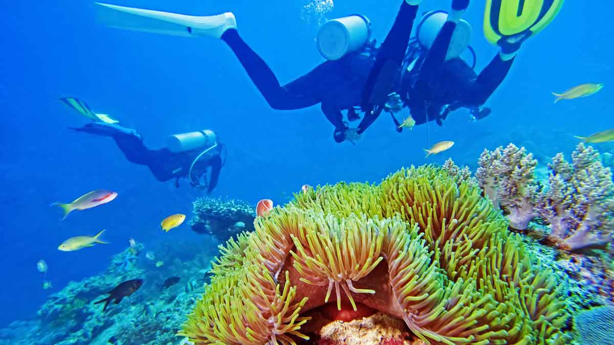 Coolest places on earth - the Great Barrier Reef