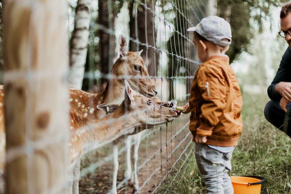 TOP 5 child friendly cities you need to check out!