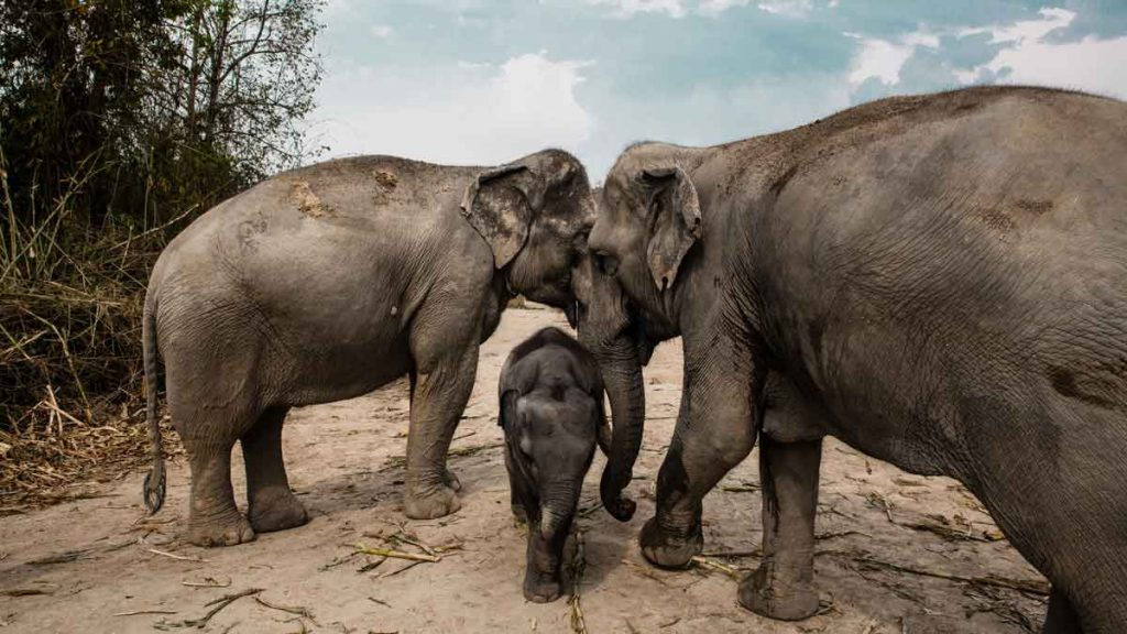 Places to visit in 2020: the elephant sanctuary in Chiang Mai
