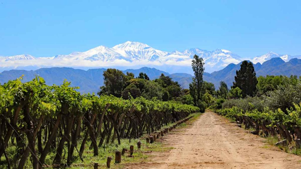 Argentinian vineyards in front of the Andes mountains