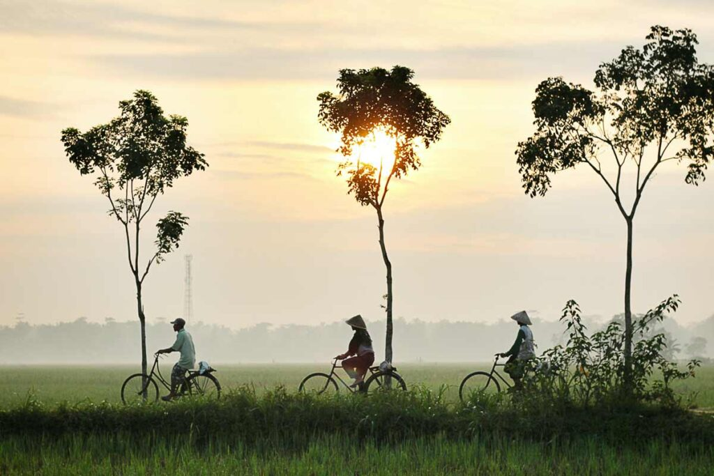 Three people cycle under three trees in Indonesia