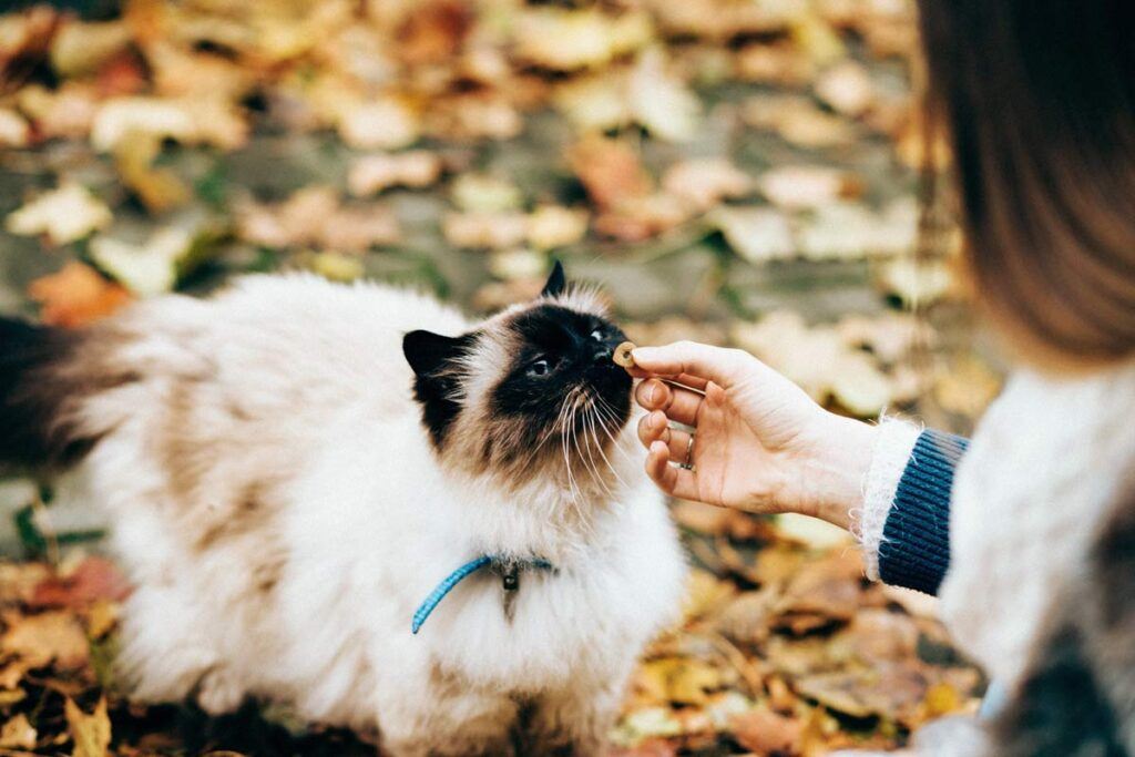 Woman strokes a cat in the park
