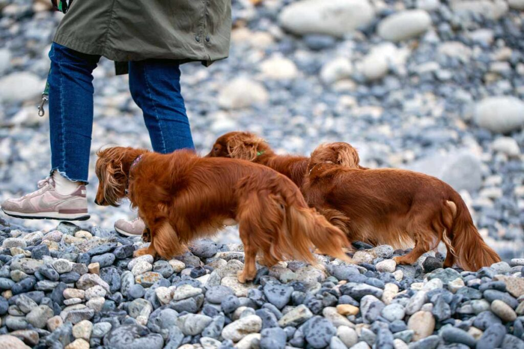 Three Dachsund dogs like the ones in this best pet blog follow their human