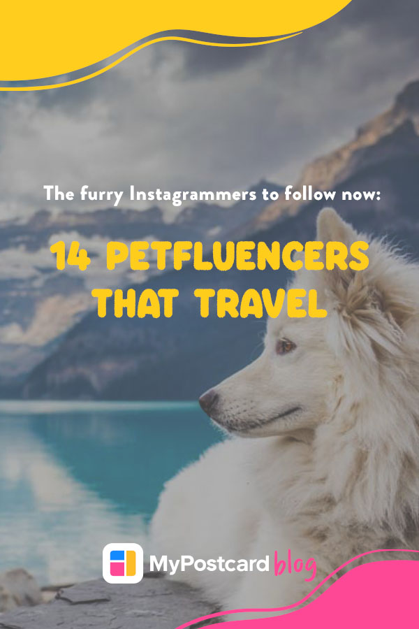 Pin for petfluencers that travel