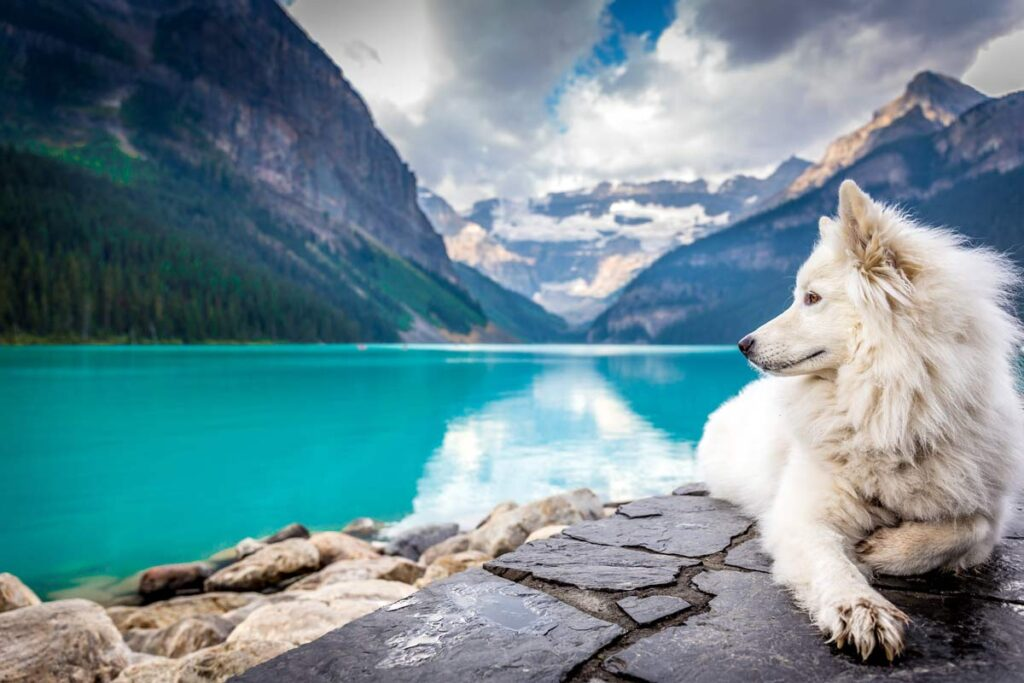 A dog pet influencer that travels on Lake Louise in Canada