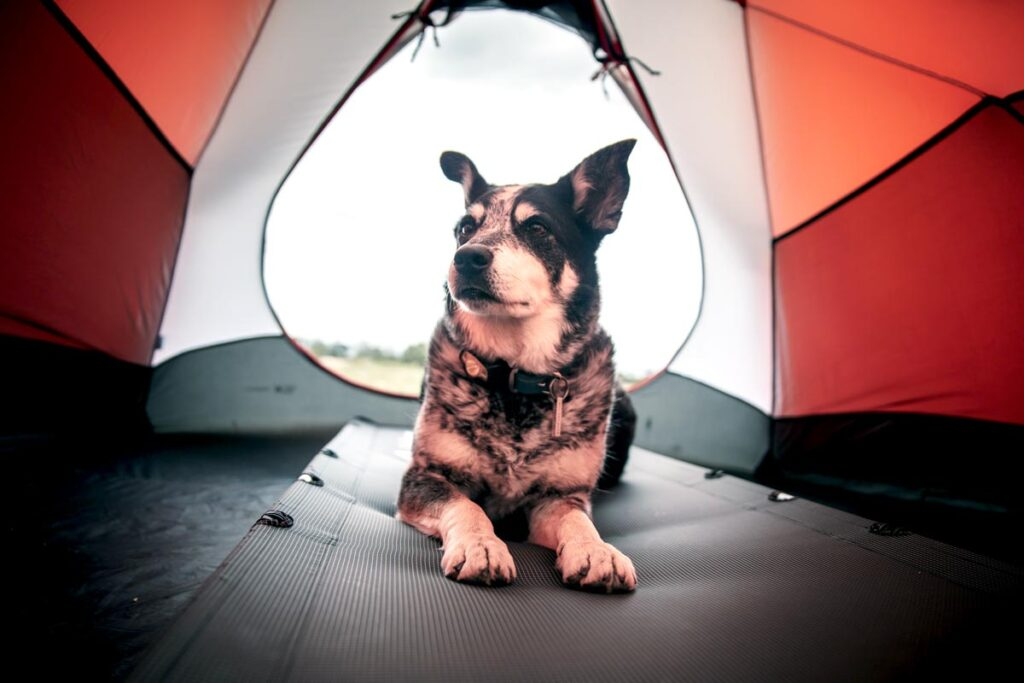 Camping photography showing a dog lying in a red tent